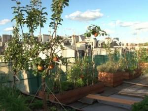 Potager sur le toit : Paris, un laboratoire géant