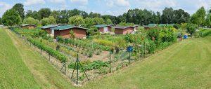 Des jardins partagés pour dynamiser les quartiers